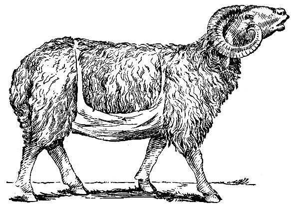 Рис. 13. Баран-пробник