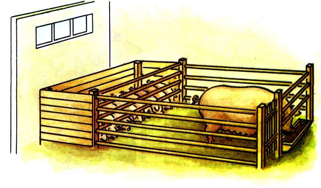 Рис. 15. Общий вид станка для свиноматки с поросятами