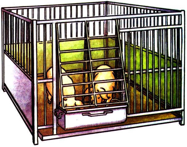 Клетка для свиней