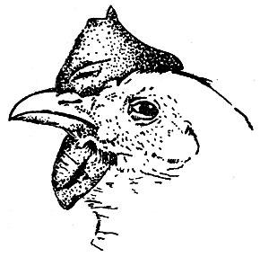Рис. 22. Сужение глаза и пена при конъюнктивите