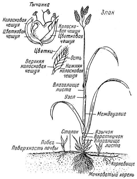 Схема морфологического