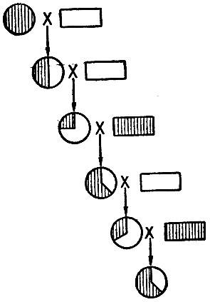 Схема скрещивания кроликов одного цвета