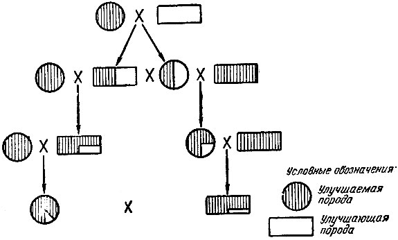 Схема вводного скрещивания