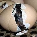 Цыплята новорожденные. Яйцо с цыплёнком